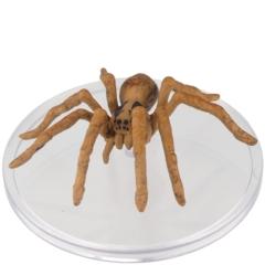 Giant Wolf Spider        D&D WILD SHAPE & POLYMORPH SET 2