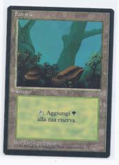 black bordered FBB Forest rush