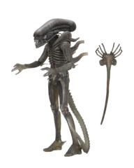 Alien 40th Annivesary - Alien 7inch Action Figure