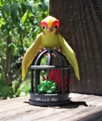 Pidgeot - 2