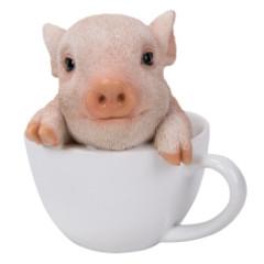 11756 Teacup Pig