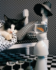 1000 Checkerboard Cat