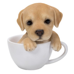 11753 Labrador Teacup Pups
