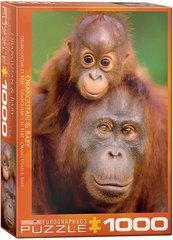 Eurographics: Orangutan & Baby