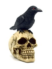 Skull with Raven