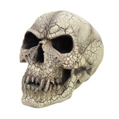 Vampire Skull