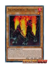 Salamangreat Raccoon - SDSB-EN001 - Common - 1st Edition