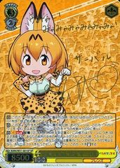KMN/W51-001SP - Serval, Curious About Everything