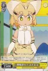 KMN/W51-014U - Sand Cat, Really Interested?