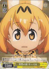 KMN/W51-024C - Serval, Sudden Tears