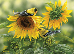 1000 - Sunflowers and Goldfinches
