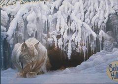 1000 - Dozing Lynx