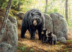 1000 - Mama Bear