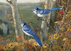 1000 - Blue Jays