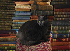 1000 - Library Cat