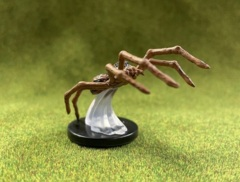 Giant Wolf Spider - 8/45