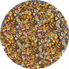 Monarch Frenzy 1000pc Puzzle