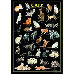 Ricordi Puzzles Puzzle: 1000 Cats